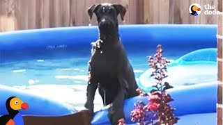 Dog Caught Sneaking Into A Swimming Pool   The Dodo