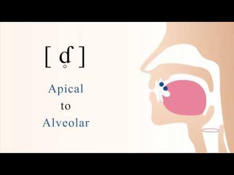 [ ɗ̥ = ƭ ] unvoiced apical alveolar implosive stop