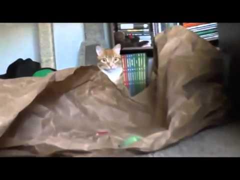 Cat scared of money box