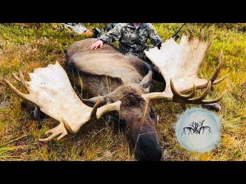 Alaskan Moose Hunt BIGGEST MOOSE WE HAVE EVER SEEN!!!!!! - Stuck N The Rut 113