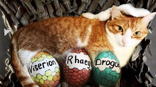 Talking Cat About Game Of Thrones! #RFC