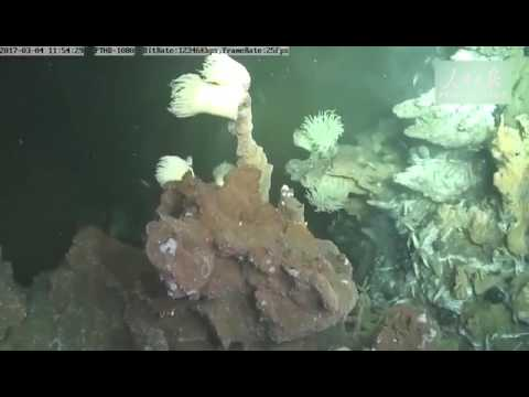 Chinese manned submersible captures rare footage of the vibrant undersea world at depth of 3500m