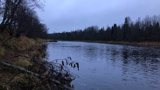 Ловля налима на реке Луга
