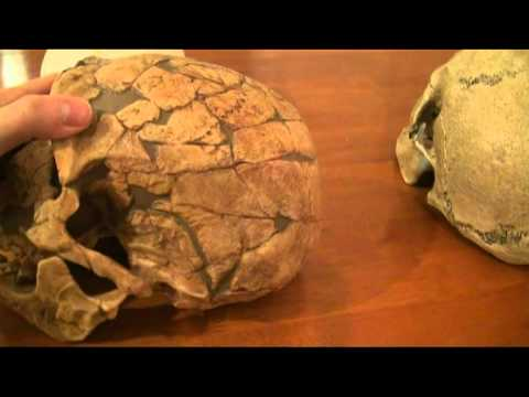 Comparison of Modern Human, Neanderthal and Cro-Magnon Part 2