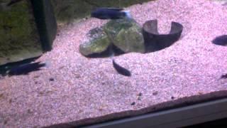underlig fisk ;D