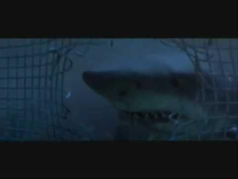 Deep Blue Sea Music Video