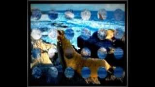 zwierzeta morskie