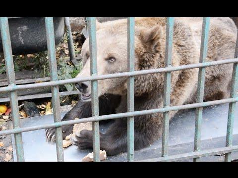 Медведица Маша | УФССП России по Новгородской области