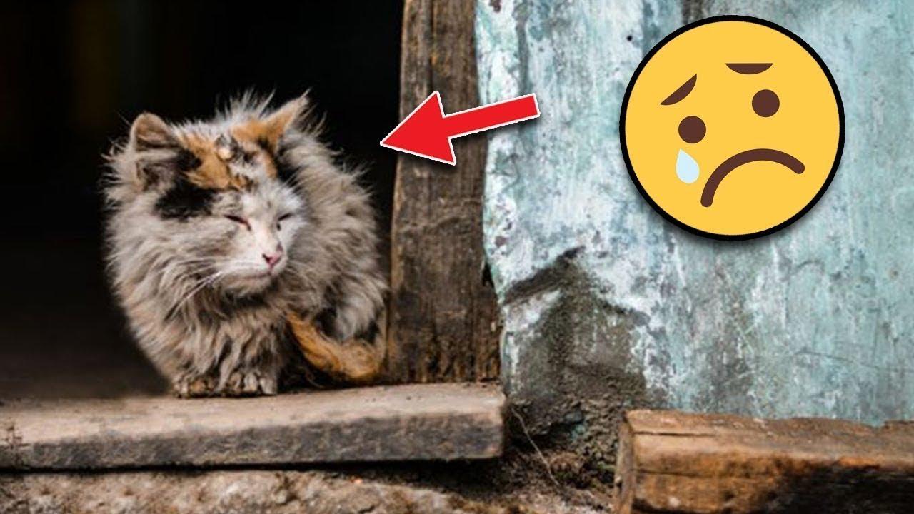 لماذا تختبئ القطط دائمًا عندما تريد ان تفارق الحياة ..؟ إليك السبب