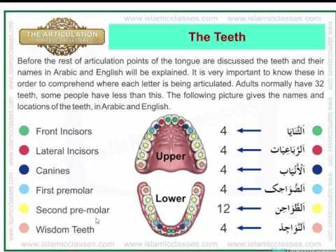 Makhraj of arabic letters