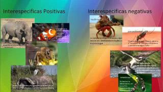 relaciones intraespecificas y interespecificas