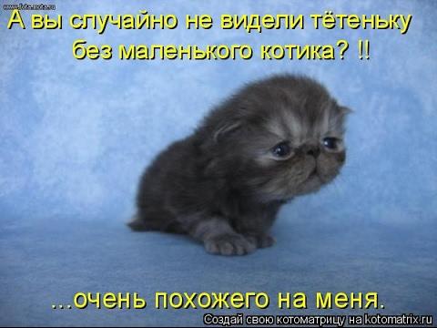 Смешные картинки про кошек и котят Выпуск №76  FUNNY CATS СМЕШНЫЕ КОШКИ