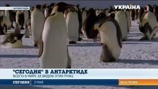 Почему пингвинов нет в украинских зоопарках? | Сегодня в Антарктиде