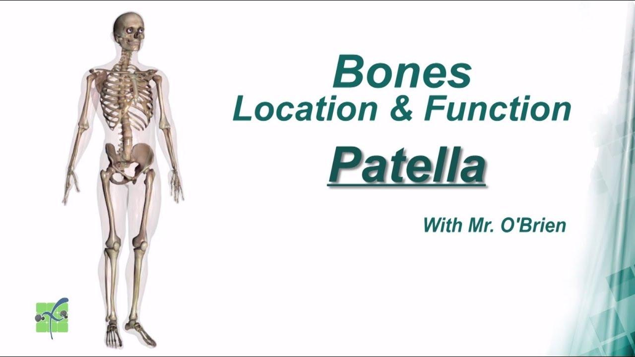 medium resolution of patella bones location function