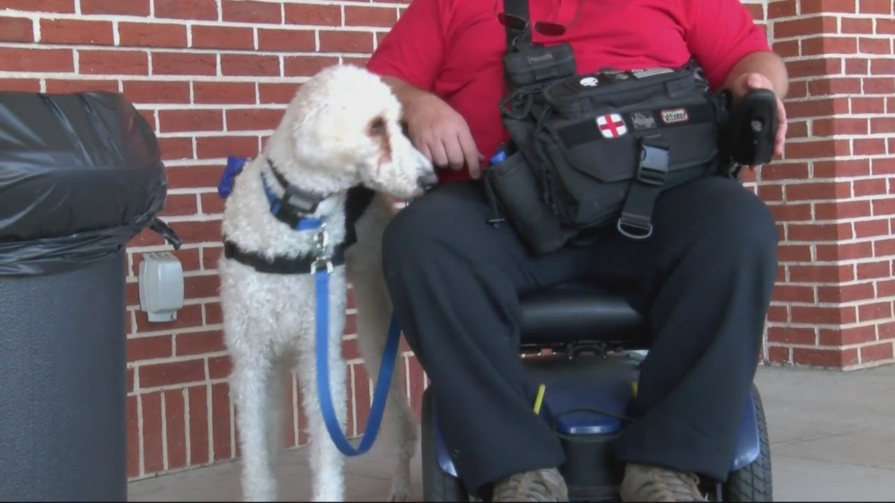 Fake service dogs are on the rise youtube fake service dogs are on the rise 1betcityfo Images