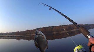 Клюёт вся рыба Открытие фидерного сезона 2021 Ловля на фидер весной 2021