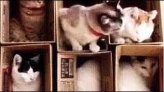 маленький котёнок пристаёт к другим котятам😅😅. Veri Good and VERI little cat.❤