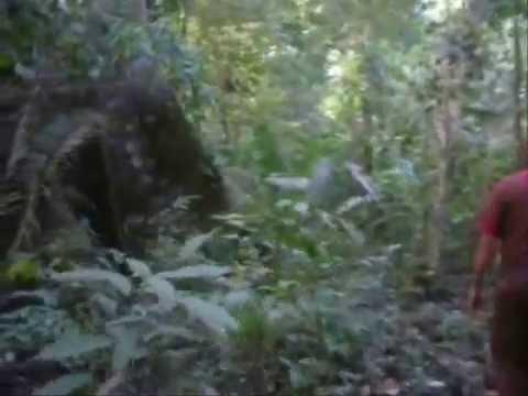Expedição Espeleológica na Amazônia