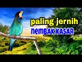 Masteran Suara Burung Tengkek Buto Ngekek  Mp3 - Mp4 Download