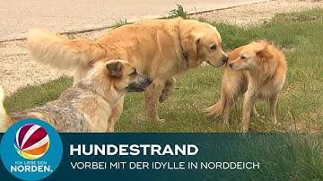 Hundestrand in Norddeich vor dem Aus – Besitzer verärgert