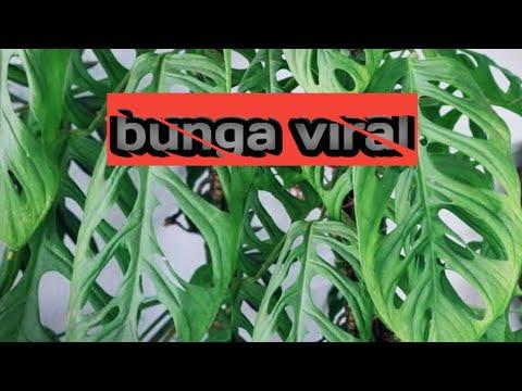 Janda Bolong Duda Bolong Pun Ada Youtube