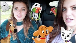We Took My Parrot, Dog and Cat Halloween Costume Shopping! | 2018 Halloween Costumes for Pets