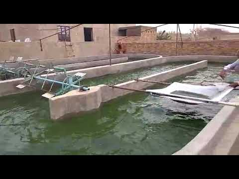 Spirulina agriculture farming in rajasthan