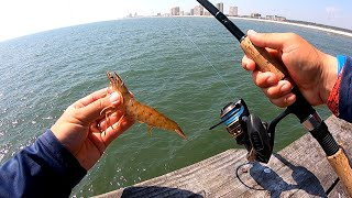 Pier Fishing with Live Shrimp