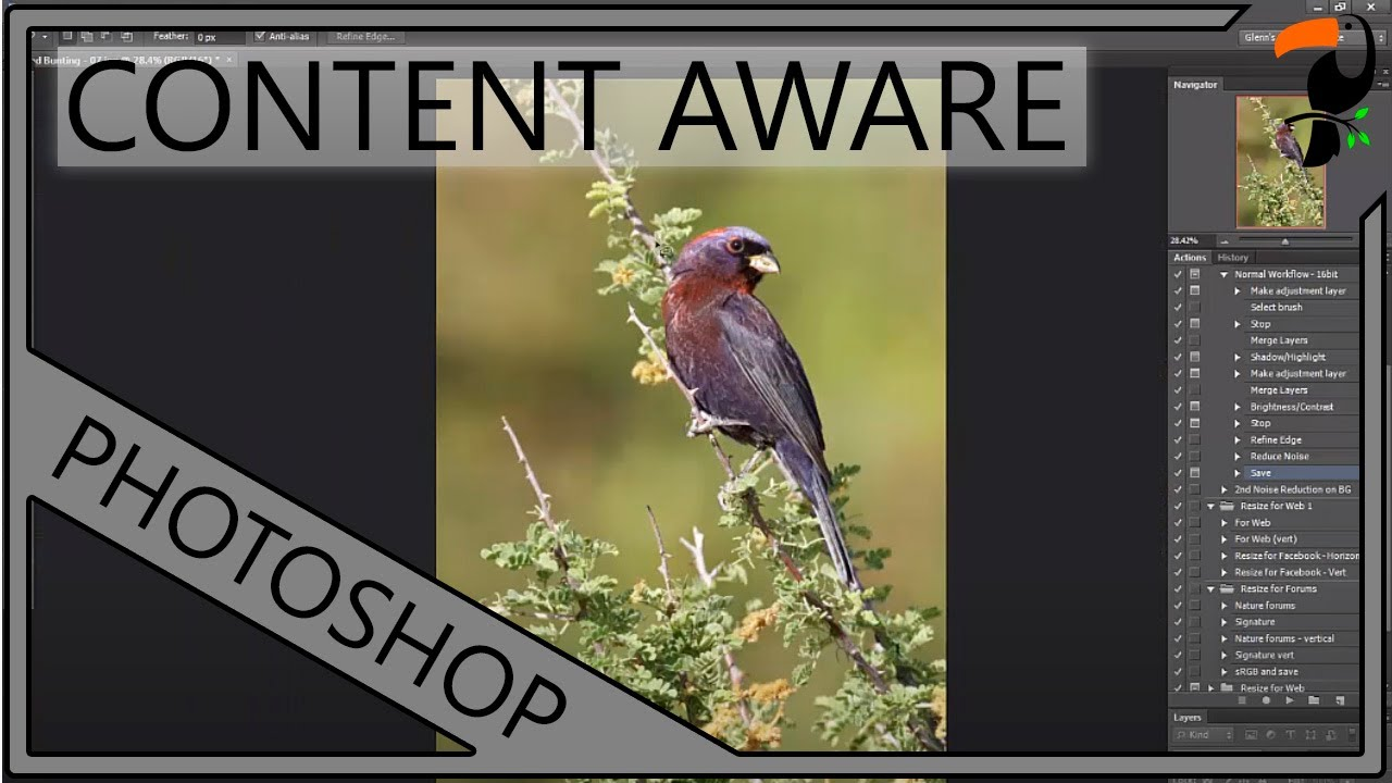 Post Processing Tips For Bird Photography | Versi On The Spot