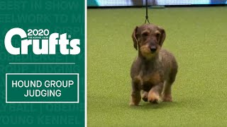 Hound Group Judging | Crufts 2020