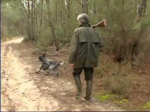 Chasse la b casse aux chiens d 39 arr t vol 1 youtube - Lanceur de balles pour chien ...