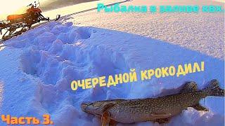 Хитрые щуки крадут живцов Третья часть рыбалки в заливе