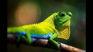 Lizard Photo Compilation Oddly Satisfying Visual Stimming Silent