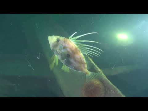 Diveworld Videos | Plymouth 2017
