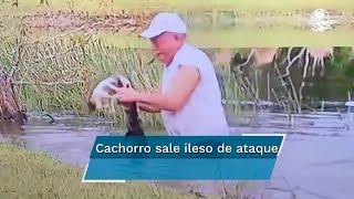 Hombre salva a cachorro de las fauces de pequeño cocodrilo