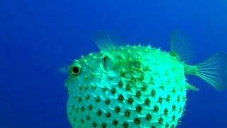 Scuba diving Egypt Red Sea - Дайвинг в Египте Красное море