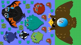 GOLDEN EAGLE FUNNY TROLLS // THE KING OF OCEAN MOPE.IO