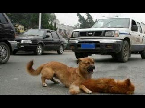 2 anjing Besar hampir ketabrak mobil