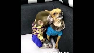やはり犬猿の仲!?お猿さんにキスされて怒るワンちゃん