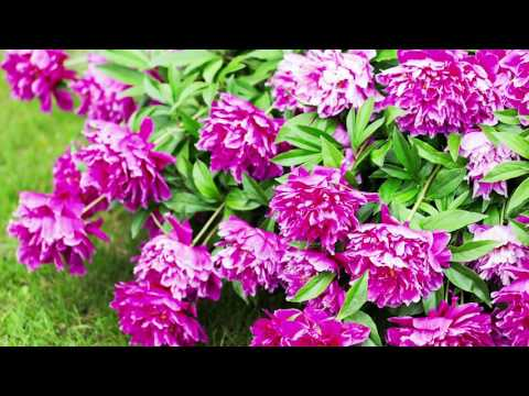 Perrennials - Give your Garden a Splash of Colour with Jane McCorkall