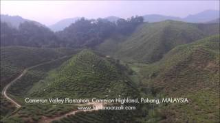 Aerial Footage Tea Plantation | Cameron Highland