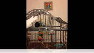 Parrot Training (mature birds)