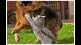 Коты против собак! Угар)))
