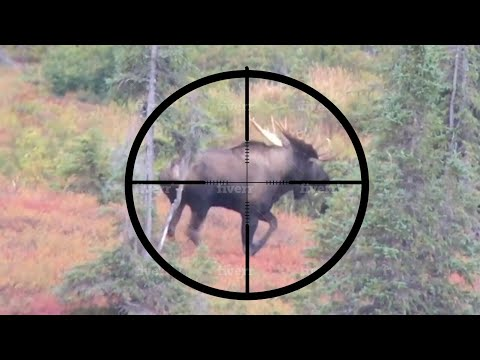 20 BEST SLOW-MO HUNTING KILL SHOTS - Stuck N The Rut Compilation