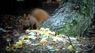 Squirrel on the Citadel in Poznan - Before Picture #2