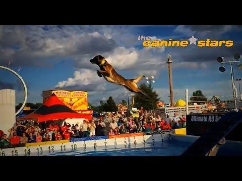 The Canine Stars: Stunt Dog Show 2015 promo