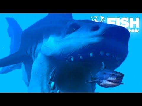 HUGE SHARK IS BACK!!! - Fish Feed Grow | Ep 23