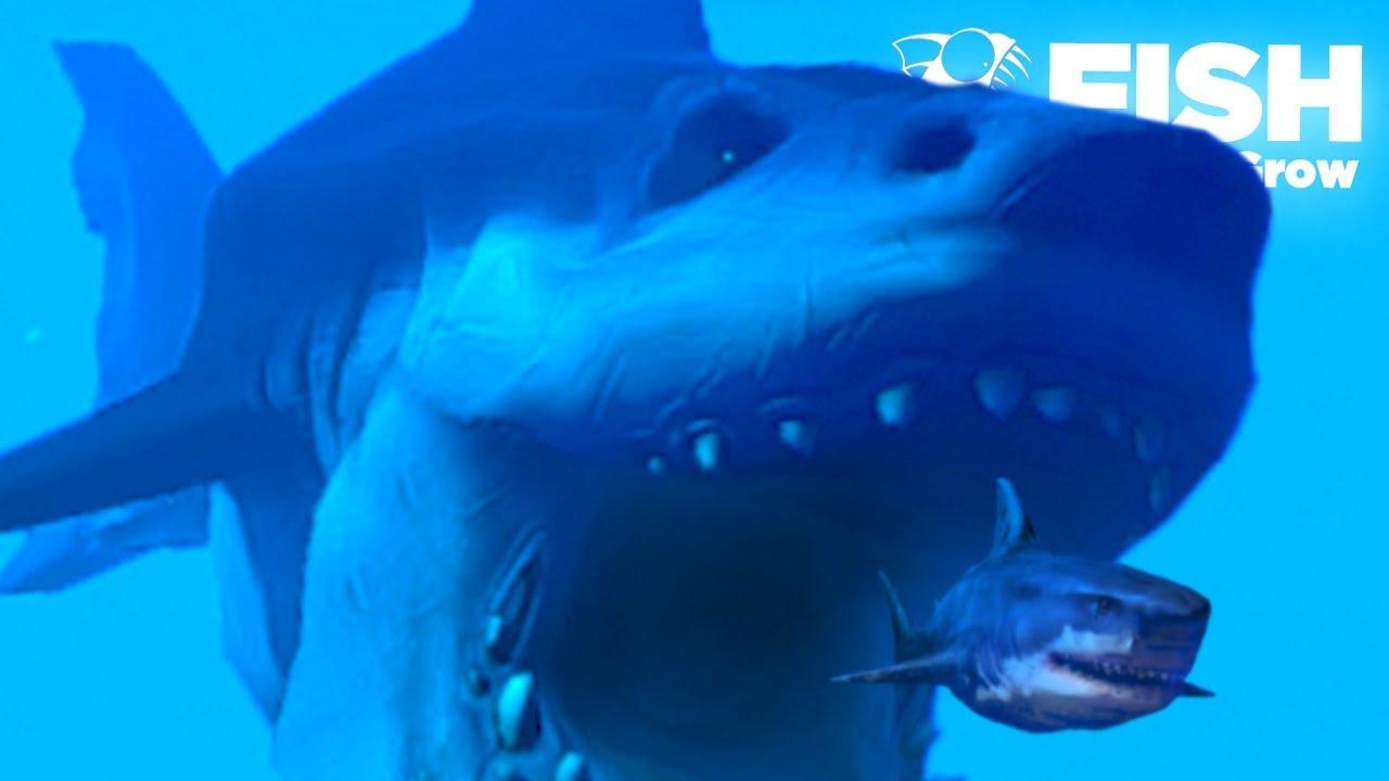 HUGE SHARK IS BACK!!! – Fish Feed Grow | Ep 23