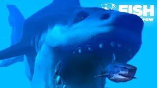 Download lagu HUGE SHARK IS BACK!!! - Fish Feed Grow   Ep 23