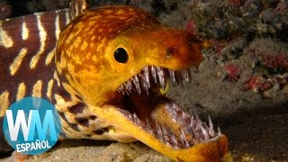 ¡Top 10 Criaturas Marinas Más PELIGROSAS!